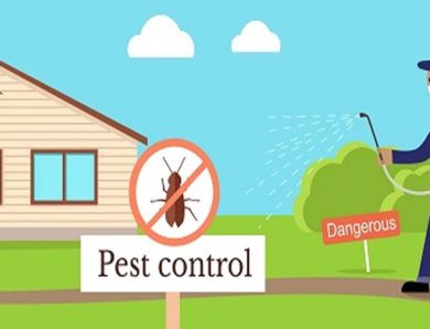 Taking the Right Steps for Pest Control